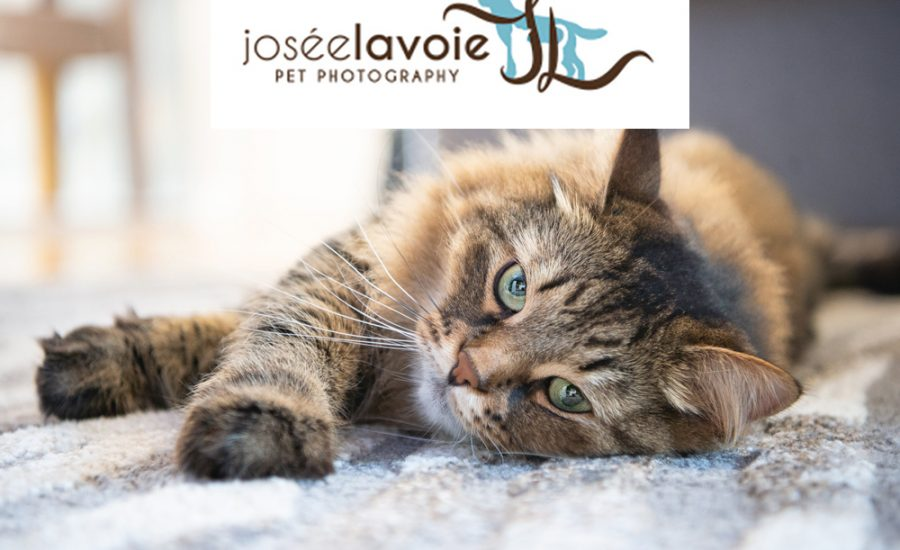Josée Lavoie Pet Photography